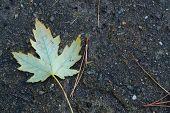 Leaf on wet floor