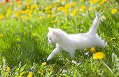 adorable grey kitten