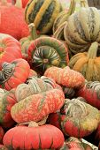 Turks Turban Squash at market