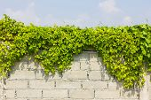 Plants On The Wall In The Background Of Cloudy Sky