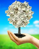 Money tree in female hand on nature background with field and sky
