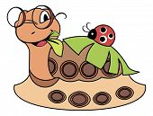 Ladybug on a cute turtle - vector illustration