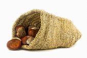 Chestnuts In Hessian Sack On White