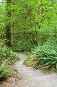 Rainforest Trail and Foliage in Olympic National Park Washington State, USA