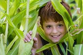 stock photo of corn cob close-up  - close up of a young boy in his home garden holding a corn cob - JPG