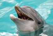 Dolphins' Portrait