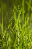 Green grass in the sunlight with a blurred background