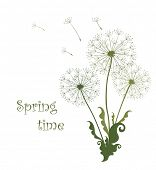 Spring card with dandelions. Raster copy