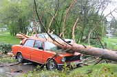 Fallen pine tree on car after Hurricane