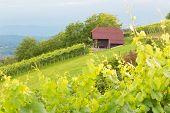Vineyard cottage.
