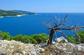 Seascape And Dry Tree