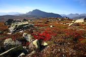 Beautiful autumn scenery with red plants and rocks in the Norwegian mountains, Oppland region