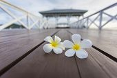 Plumeria on Wooden pier at Koh Si Chang island Thailand