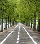 picture of row trees  - Vercelli  - JPG