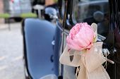 Wedding Car With Flower And White Bow Rear View
