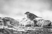 Little Bird Sitting On A Log