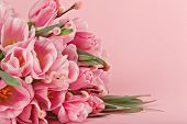 Bouquet Of Pink Tulips On Pink Background