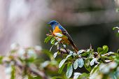 a colourful bird sitting on the branch
