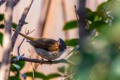 a bird sitting among trees
