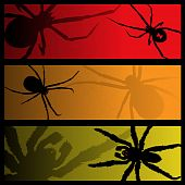 image of black widow spider  - Three scary banners featuring spiders and shadows - JPG
