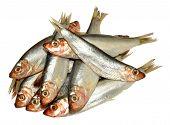 Fresh Fish Sprats