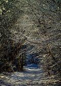 Winter Alley Road