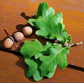 Acorns And Oak Leaves On A Wooden Board