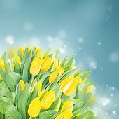 spring narcissus garden
