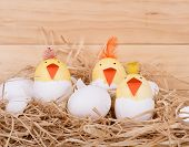 Hatching Easter Egg Chicks