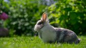 Cute Fluffy Rabbit Outdoors In Summer (16:9 Aspect Ratio)