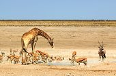 Etosha Waterhole teeming with animals