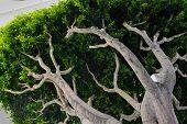 Under Branches