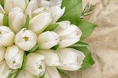 Tulip Bouquet In Wrapper