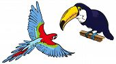 Macaw And Toucan