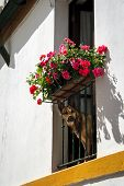 Dog (german Shepherd) Peeking Through A Flowered Balcony