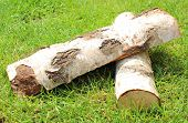 picture of firewood  - Stack of cut logs firewood from silver birch tree on the grass - JPG