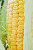 image of corn  - Sweet corn closeup - JPG