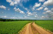 image of dirt road  - Dirt road through the fields - JPG