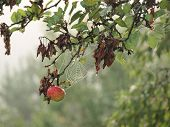 foto of bohemia  - view autumn fruits southern Bohemia . Czech Republic ** Note: Soft Focus at 100%, best at smaller sizes - JPG