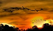 Ducks on a Sunset Flight