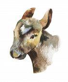 picture of calf  - Watercolor calf portrait illustration - JPG