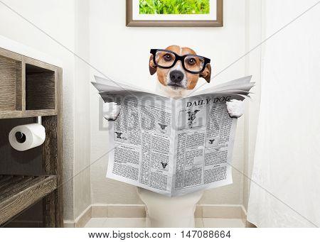 Dog On Toilet Seat Reading