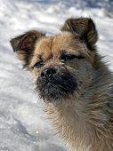 Kleiner Hund mit kleinen Bart 1