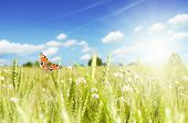 butterfly on flower field with sky and clouds