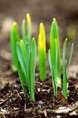 Frühling-Shootings