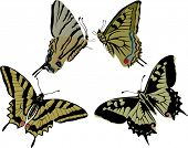 illustration with three different butterflies isolated on white background