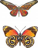 illustration with two orange butterflies isolated on white background
