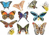 illustration with eleven different butterflies isolated on white background