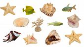 set of sea invertebrates and fishes isolated on white background