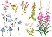 Ilustración con hierbas silvestres aisladas sobre fondo blanco